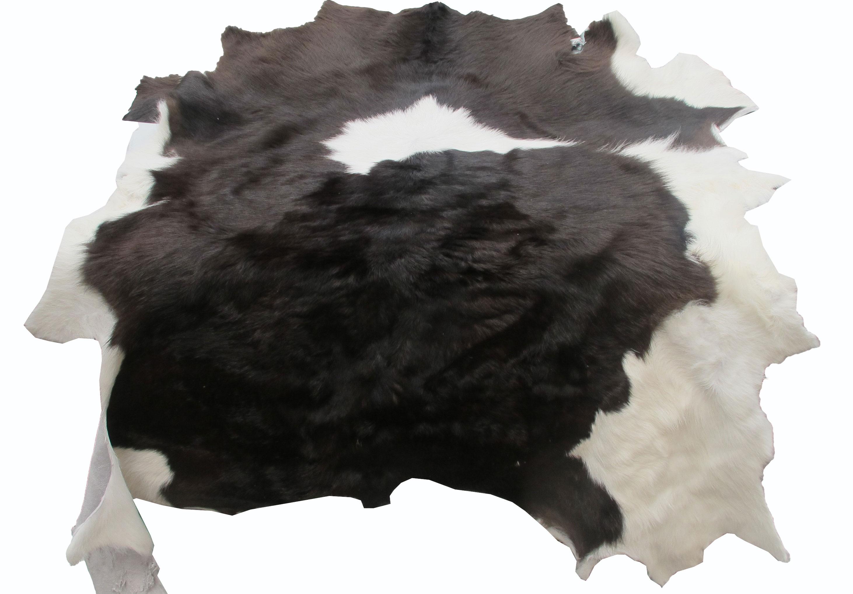 หนังแท้ หนังขนลูกวัว ใช้สำหรับตกแต่งฝาผนังบ้าน หรือ ใช้เป็นผ้าปูโต๊ะแล้วเอากระจกทับ หรือ ผ้าคลุ่มเก้าอี้นั่ง สำเนา สำเนา สำเนา สำเนา สำเนา สำเนา สำเนา